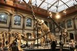 naturkundemuseum1-8cdd458930e498812cf0e6a93881310f